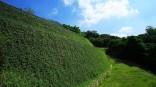 Soil reinforcement with greening aesthetics