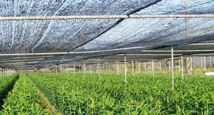 Crop protection from the damage of hails and birds