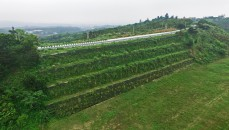 Green Engineering in Taiwan - Disastrous Slope Failure Reconstruction project